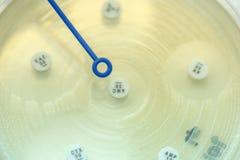 δοκιμή μεθόδου διάχυσης για το γραμμάριο - αρνητικοί βάκιλοι  εστίαση σε όλο το α στοκ φωτογραφίες με δικαίωμα ελεύθερης χρήσης