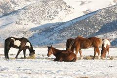Οκνηρά άλογα στη ροδοκόκκινη κοιλάδα βουνών Στοκ φωτογραφίες με δικαίωμα ελεύθερης χρήσης