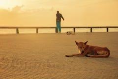 Οκνηρά σκυλιά που χαλαρώνουν και που κοιμούνται ενώ κάποιος ήταν άσκηση κοντά στην παραλία το πρωί Στοκ Φωτογραφίες