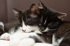 Οκνηρές γάτες Στοκ Φωτογραφία