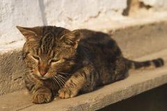 Οκνηρή γάτα στοκ εικόνες