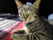 Οκνηρή γάτα 2 Στοκ Εικόνες