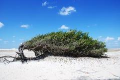 Οκνηρό δέντρο Στοκ φωτογραφία με δικαίωμα ελεύθερης χρήσης