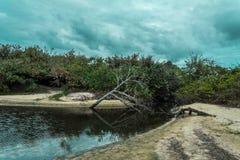 2018, Οκτώβριος Florianopolis, Βραζιλία Νεκρός κορμός δέντρων αφορημένος κάτω την επιφάνεια μιας μικρής πορείας του νερού, Campec στοκ φωτογραφίες με δικαίωμα ελεύθερης χρήσης