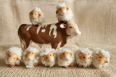 Οκτώ χαριτωμένα πρόβατα και ένα παιχνίδι αγελάδων μαζί στο αγρόκτημα Στοκ Εικόνα