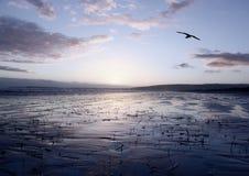 ολίσθηση ειρηνική Στοκ φωτογραφίες με δικαίωμα ελεύθερης χρήσης