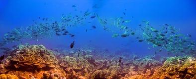 Ολίσθηση-επάνω ενός ψαριού τροφίμων στοκ εικόνες