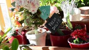 Ολίσθηση στο σημάδι φρέσκο καθημερινά στα λουλούδια απόθεμα βίντεο