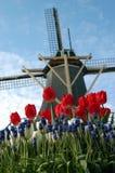 ολλανδικά χαρακτηριστι&k Στοκ εικόνα με δικαίωμα ελεύθερης χρήσης