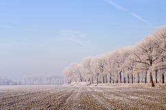 ολλανδικός αγροτικός χειμώνας zeeland Στοκ εικόνα με δικαίωμα ελεύθερης χρήσης