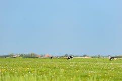 ολλανδικό τοπίο αγελάδ&ome Στοκ φωτογραφίες με δικαίωμα ελεύθερης χρήσης