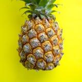 Ολόκληρα τροπικά φρούτα ανανά με τη φυσική οργανική τροφή φύλλων στο κίτρινο υπόβαθρο Στοκ Εικόνες