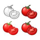 Ολόκληρες και μισές ντομάτες Διανυσματική εκλεκτής ποιότητας χάραξη και επίπεδη απεικόνιση διανυσματική απεικόνιση
