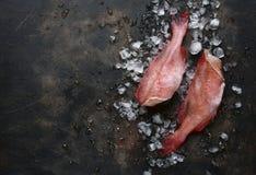 Ολόκληρη ακατέργαστη οργανική πέρκα θάλασσας ψαριών στους κύβους πάγου Τοπ άποψη με το αντίγραφο στοκ φωτογραφία με δικαίωμα ελεύθερης χρήσης