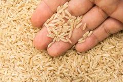 Ολόκληρος κινεζικός σπόρος ρυζιού Πρόσωπο με τα σιτάρια διαθέσιμα Μακροεντολή Whol στοκ εικόνες με δικαίωμα ελεύθερης χρήσης