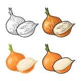 Ολόκληρο και μισό κρεμμύδι Διανυσματική εκλεκτής ποιότητας χάραξη και επίπεδη απεικόνιση διανυσματική απεικόνιση