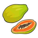 Ολόκληρο και μισό papaya Διανυσματικό εκλεκτής ποιότητας χρώμα χάραξης ελεύθερη απεικόνιση δικαιώματος