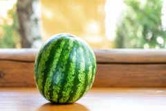 Ολόκληρο πράσινο οργανικό ώριμο καρπούζι στο ξύλινο ράφι υπαίθρια Το φρέσκο νόστιμο μούρο έτοιμο να είναι και εξυπηρέτησε Υγιής στοκ φωτογραφία
