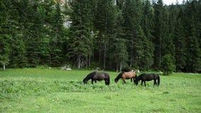 Ομάδα αλόγων στο θερινό λιβάδι φιλμ μικρού μήκους