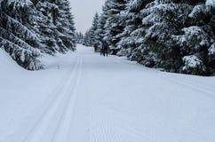 Ομάδα ανθρώπων που κάνει ανώμαλο να κάνει σκι κοντά σε Jizerka Στοκ Φωτογραφία