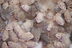 Ομάδα βατράχου μωρών στοκ εικόνα με δικαίωμα ελεύθερης χρήσης