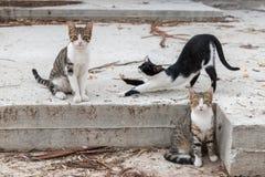 Ομάδα γατών στοκ εικόνα με δικαίωμα ελεύθερης χρήσης