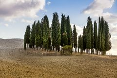 Ομάδα δέντρων στους Tuscan λόφους στο ηλιοβασίλεμα στην Ιταλία Στοκ εικόνα με δικαίωμα ελεύθερης χρήσης