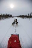 ομάδα ελκήθρων σκυλιών Στοκ εικόνες με δικαίωμα ελεύθερης χρήσης