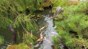 Ομάδα ζωηρόχρωμων ψαριών στην ιαπωνική λίμνη κήπων Στοκ εικόνες με δικαίωμα ελεύθερης χρήσης