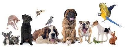 Ομάδα κατοικίδιου ζώου Στοκ φωτογραφία με δικαίωμα ελεύθερης χρήσης