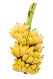 Ομάδα μπανανών Στοκ εικόνες με δικαίωμα ελεύθερης χρήσης