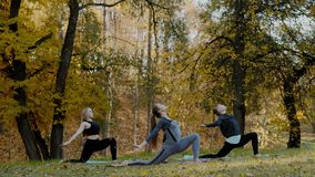 Ομάδα νέων γυναικών που κάνουν την άσκηση δράσης γιόγκας υγιή στο πάρκο Έννοια τρόπου ζωής υγείας απόθεμα βίντεο