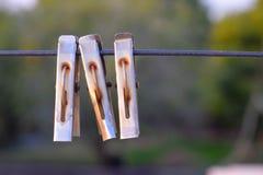 ομάδα οξυδωμένων συνδετήρων ιματισμού σιδήρου που χρησιμοποιούνται για το στέγνωμα των ενδυμάτων στοκ εικόνα με δικαίωμα ελεύθερης χρήσης