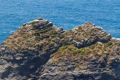 Ομάδα πελαργών και απότομων βράχων σε Arrifana Στοκ φωτογραφίες με δικαίωμα ελεύθερης χρήσης