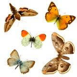 ομάδα πεταλούδων Στοκ φωτογραφία με δικαίωμα ελεύθερης χρήσης