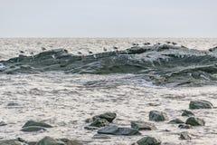 Ομάδα πουλιών στους βράχους, Μοντεβίδεο, Ουρουγουάη Στοκ φωτογραφία με δικαίωμα ελεύθερης χρήσης
