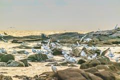 Ομάδα πουλιών στους βράχους, Μοντεβίδεο, Ουρουγουάη Στοκ Εικόνα