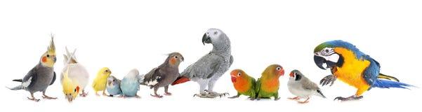 ομάδα πουλιών Στοκ εικόνα με δικαίωμα ελεύθερης χρήσης