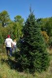 Ομάδα που μετρά τα χριστουγεννιάτικα δέντρα Στοκ Εικόνες