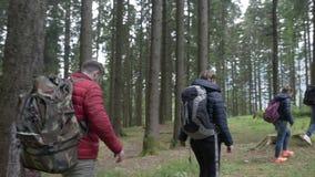 Ομάδα τολμηρών εφήβων με τα σακίδια πλάτης που εξερευνούν τα ξύλα που μέσω του δασικού ίχνους μαζί - απόθεμα βίντεο