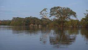 Ομάδα τουριστών σε μια βάρκα που πλέει στη λιμνοθάλασσα Cuyabeno με ένα υπόβαθρο των δέντρων που απεικονίζει στο νερό στοκ φωτογραφία
