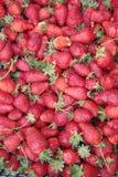 Ομάδα φραουλών που πωλούνται σε μια αγορά τροφίμων Στοκ εικόνες με δικαίωμα ελεύθερης χρήσης