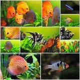 ομάδα ψαριών Στοκ Εικόνες