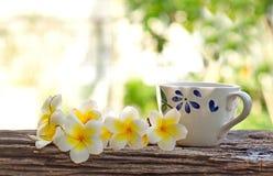 Ομάδα όμορφων λουλουδιού Plumeria και φλυτζανιού καφέ Στοκ εικόνα με δικαίωμα ελεύθερης χρήσης