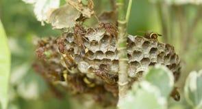 Ομάδα hornets Στοκ Φωτογραφίες