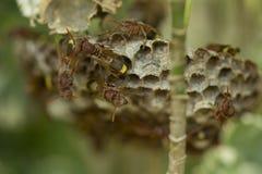 Ομάδα hornets Στοκ Εικόνα