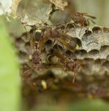 Ομάδα hornets Στοκ φωτογραφία με δικαίωμα ελεύθερης χρήσης