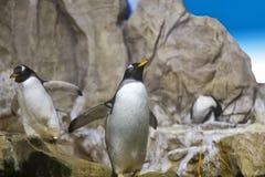 Ομάδα penguins στο βράχο Στοκ Εικόνες