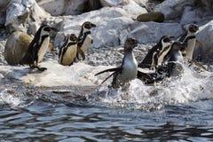ομάδα penguins Στοκ φωτογραφία με δικαίωμα ελεύθερης χρήσης