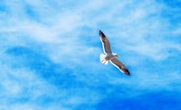 Ομάδα seagulls στον ουρανό, Puerto Montt, Χιλή εκλεκτικό πλάνο εστίασης υπαίθρια στοκ εικόνες με δικαίωμα ελεύθερης χρήσης